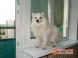 Собачка на подоконнике установленного окна