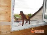 Фигурка лошади на установленном окне