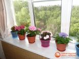 Цветы на установленном пластиковом подоконнике