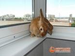 Кролик на установленном подоконнике балкона