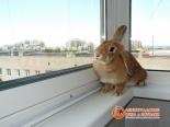 Кролик на подоконнике установленной системы Slidors
