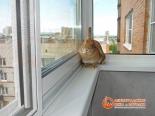 Кролик на ПВХ подоконнике балкона - фото 3